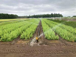 Conifer Irrigation 7.15.21 min